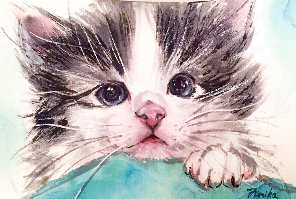 cat baby01